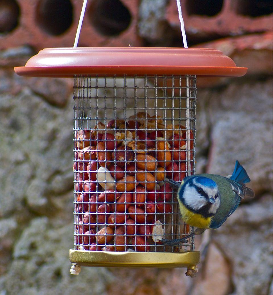 Comedero para aves otras cosas productos tienda - Comedero de pajaros ...
